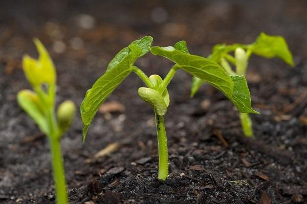 9 tác dụng của tinh chất mầm đậu nành đối với nữ giới