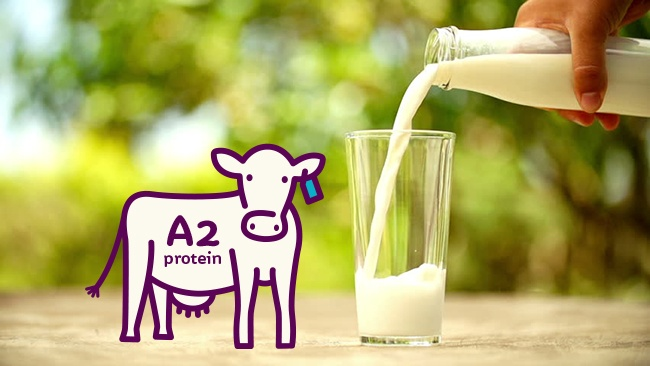 Nồi nấu sữa bò, dê